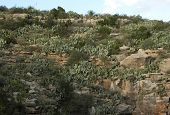 stock photo of carlsbad caverns  - The cliff entrance to Carlsbad Caverns covered with cactus - JPG