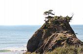 Постер, плакат: Побережье океана рок с растительностью