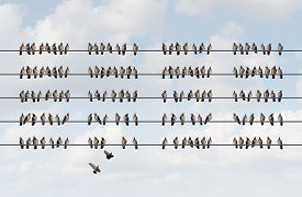 image of cluster  - Group management business concept as a cluster of birds on a wire in the shape of organized aligned pattern as a metaphor for staff and company coordination planning and managing employee strategy - JPG