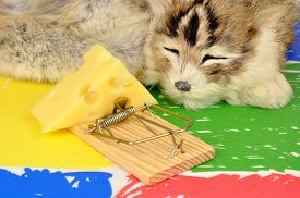 pic of mouse trap  - Cat sleeping next to a mouse trap baited with a wedge of cheese on a colourful floor background - JPG