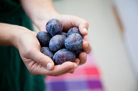 stock photo of prunes  - woman holding german plums prunes in her hand in the kitchen - JPG