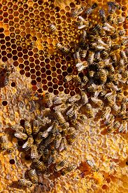 stock photo of honeycomb  - Close up view of the working bees on the honeycomb with sweet honey - JPG