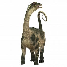 foto of herbivore  - Antarctosaurus was a sauropod herbivore dinosaur that lived during the Cretaceous Period in South America - JPG