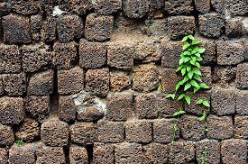 image of pumice-stone  - Little plant grow on black volcanic pumice stone wall - JPG