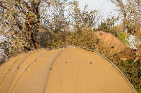pic of dangerous situation  - Elephant near camping tents, a dangerous situation