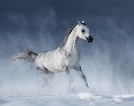 image of dapple-grey  - Purebred  grey arabian horse galloping during a blizzard - JPG