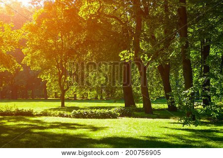 poster of Summer landscape - colorful summer park with deciduous summer trees in sunny weather. Sunny day in summer park -green summer trees under soft summer sunlight. Bright summer landscape scene