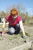 pic of early 50s  - Smiling mature woman weeding a garden plot in early spring - JPG