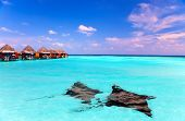 picture of guitarfish  - Island in ocean overwater villas and a eagle ray  - JPG