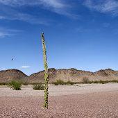 Постер, плакат: Аризона задворк