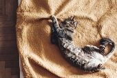 Beautiful Cat Sleeping On Stylish Yellow Blanket With Adorable Emotions In Rustic Room, Top View. Cu poster