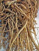 pic of tuberose  - natural fresh root diversity, tuber details, nature ** Note: Slight graininess, best at smaller sizes - JPG