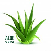 Natural Medicine Foliage Plant Aloe Vera . Realistic Medicinal Vitamin Plant With Fresh Splash Juice poster