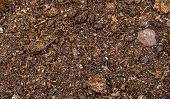 Dry Potting Soil In Macro Closeup, Pattern Of Dry Ground, Gardening Background, Fertile Earth poster