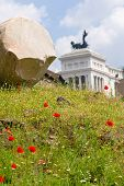 ������, ������: Poppies In Rome