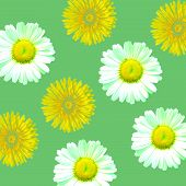 Pretty Flower Background