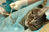 foto of spayed  - Veterinarian - JPG