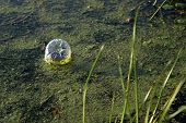 picture of water pollution  - An old water bottle pollutes the side of a river bank - JPG