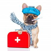 foto of high fever  - french bulldog dog with headache and hangover with ice bag or ice pack on headthermometer in mouth with fever holding a first aid kit eyes closed and suffering isolated on white background - JPG
