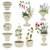 stock photo of pepper  - Flower pots with vegetables  - JPG