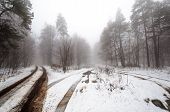 picture of icy road  - Winter road through the trees in the snow - JPG