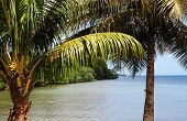picture of swamps  - France mangrove swamp in Sainte Rose in Guadeloupe - JPG
