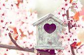 image of nesting box  - Decorative nesting box on bright background - JPG