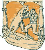 stock photo of kangaroo  - Etching engraving handmade style illustration of a kangaroo with boxing gloves boxing man set on a stage - JPG