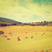 picture of hay bale  - Italy Landscape with Many Hay Bales Retro Effect  - JPG