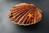 stock photo of scallops  - Beautiful composition of big scallop and little seastar on a gray background - JPG