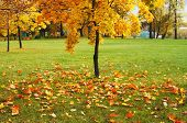 foto of fall leaves  - fall of the leaves in the town - JPG