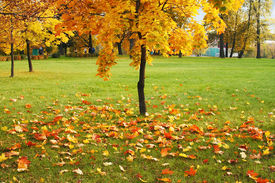 stock photo of fall leaves  - fall of the leaves in the town - JPG