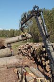 stock photo of skidder  - Crane with jaws loading logs onto a stac - JPG