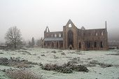 picture of chepstow  - tintern abbey in the frost on a winter - JPG