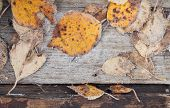 Fallen Leaves With White Frost Lay On Wood poster