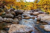 River Stone And Tree Colorful, View Water River Tree, Stone River In Multi Color Tree Leaf In Forest poster