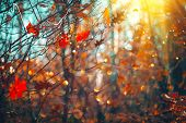 Autumn colorful bright Leaves swinging in a tree in autumnal Park. Autumn colorful background, fall  poster