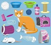 Cat Toys Pets Accessories For Pussycats Care Or Playing Kitten Bowl And Animal Grooming Tools Kitty  poster