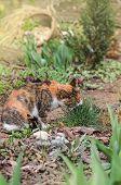 Cat In The Summer Garden poster