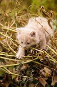 Kitten In The Garden In Green Grass poster