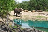 African Elephants Are Elephants Of The Genus Loxodonta. The Genus Consists Of Two Extant Species: Th poster