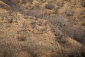 Habitat Image With A Female Tiger And Alert Sambar Deer At Ranthambore National Park. A Beautiful Ti poster