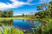 picture of grass area  - Green trees by the lake on a sunny day with clouds on the sky