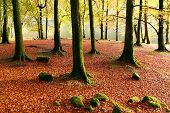 pic of wild adventure  - Autumn magic forest on the shores of Lochness - JPG