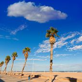 Valencia Malvarrosa Las Arenas beach palm trees in Patacona of Alboraya spain