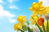 Daffodil flower with easter egg against blue sky