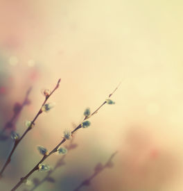 picture of garden-art  - Spring flower background - JPG