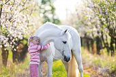 pic of orchard  - Small child with a white horse in apple orchard at sunset - JPG