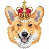 image of corgi  - color sketch of the dog Pembroke Welsh corgi breed in gold crown - JPG