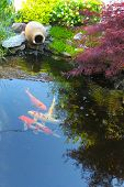 foto of koi  - Koi fish in a small decorative pond - JPG